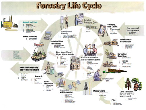 Forest Management Life Cycle